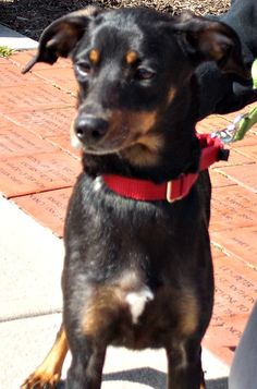 Laney  Breed:  Miniature Pinscher mix  Estimated Date of Birth:  03/2010  Weight:  18 pounds