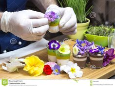 Photo about Cook prepares canapes dessert edible flowers and buds. Image of canapes, bread, appetizer - 53654090 Edible Plants, Edible Flowers, Growing Flowers, Planting Flowers, Bellis Perennis, Ornamental Plants, Canapes, Fruit Trees, Appetizers