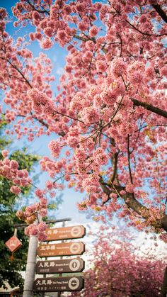 41 Ideas Wallpaper Iphone Spring Nature Pink Flowers For 2019 Frühling Wallpaper, Spring Wallpaper, Flower Wallpaper, Nature Wallpaper, Wallpaper Backgrounds, Trendy Wallpaper, Flowers Nature, Spring Flowers, Beautiful Flowers