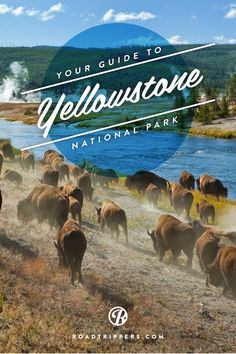 Majestic Places to See in Wyoming Perfect for Every Outdoor Enthusiast The Ultimate Guide to Exploring Yellowstone National Park Best Places To Camp, Places To Travel, Places To See, Travel Destinations, Yellowstone Vacation, Yellowstone Park, Us National Parks, Grand Teton National Park, National Park Camping