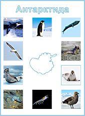 Монтессори-материал. Антарктида