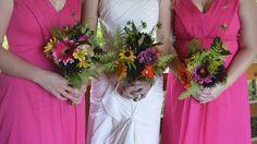Hot Pink, photographer Amy Barrett