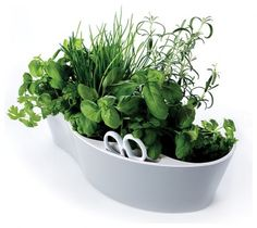 Minimalist herb garden- with a space for your scissors :)