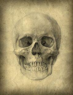 Yaroslav Gerzhedovich - Skull Studies (1986-88)