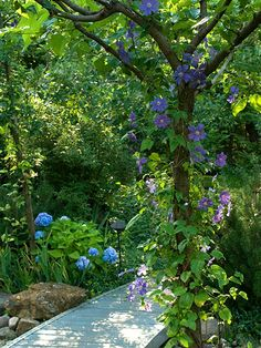 Get More in Less Space - Grow vines to add an extra layer of color to your shade garden. Smaller vines, such as clematis, are often happy to scramble up the trunk of small to medium sized trees. Bigger vines are ideal for covering a wall or creating a privacy screen. Test *Garden Tip: Three of the best vines for shady spots are: Dutchman's Pipe, Climbing Hydrangea, and Virginia Creeper.