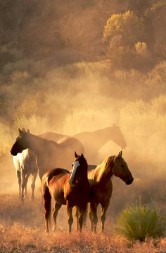 Gorgeous horses caught in magical light.