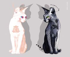 Sphynx cats by Sara Ligari more sphynx also here