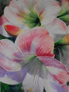 """""""Stages"""" by Nancy Reyna. Tropical flowers, Amaryllis, pink flowers, original watercolor painting, fine art reproductions."""