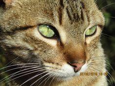 miradas que enamoran #gato