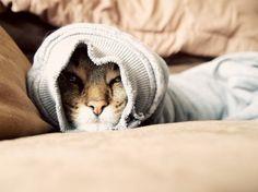bahahahaha cats are weird