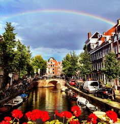 golden day in Amsterdam. Photography Moon Jansen