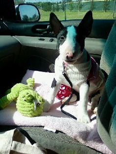 LULU - have never met her, just saw her picture on here ... There is nothing like the love of a bully