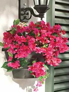 Half Wall Planter - Wall mounted hanging basket | Solutions