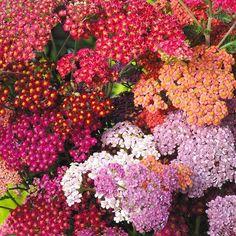 почвопокровные цветы многолетники фото и названия: 17 тыс изображений найдено в Яндекс.Картинках