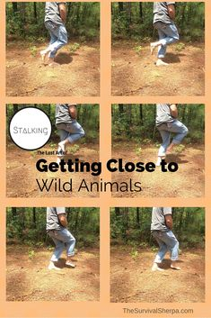 Stalking: The Lost Art of Getting Close to Wild Animals | TheSurvivalSherpa.com