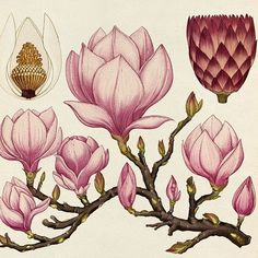 """crossconnectmag: """" Botanical Illustrations by Katie Scott   Katie Scott is a freelance illustrator based in London and represented for commercial work by Big Active. She studied illustration at..."""