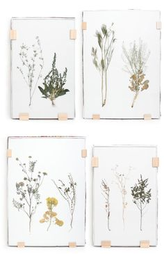 pretty pressed flowers /