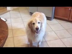 These Poor Dogs Are All Feeling A Bit Stoned After A Visit To The Vet. | Top Viral Flip