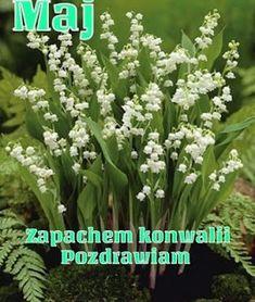 Dla każdego: POZDRAWIAM Birthday Wishes, Good Morning, Herbs, Humor, Plants, Pictures, Blog, Buen Dia, Photos
