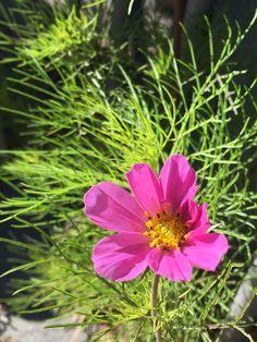 79 Mejores Imágenes De Plantas Resistentes Al Viento Plants