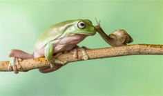 Friendship budding between a frog and a snail