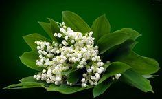 Kwiaty, Bukiet, Konwalia