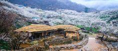 Maehwa Village-Plum Blossom Village