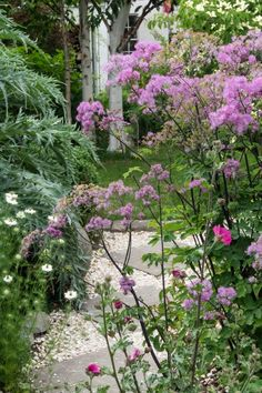 How to create beautiful borders for a small garden - planting ideas that really work! Cottage Garden Design, Cottage Garden Plants, Small Garden Design, Very Small Garden Ideas, Small Garden Inspiration, Plants For Small Gardens, Small Courtyard Gardens, Narrow Garden, Big Garden