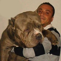 Pitbull. Awwhhh so cute never seen one this big