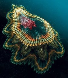 """The """"Spanish Dancer Jellyfish"""" was created by underwater photographer and fractal artist Francis Le Guen, who manipulated an image of a """"Spanish Dancer"""" sea slug in order to create this image. Underwater Creatures, Underwater Life, Ocean Creatures, Weird Sea Creatures, Beautiful Sea Creatures, Animals Beautiful, Beautiful Images, Under The Water, Fauna Marina"""