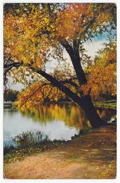 Postcards - United States # 861 - Autumn Scene