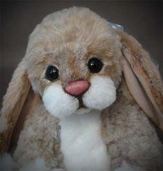 Bunny... Mr. Fluff