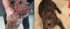 Photos Prove Love Is All You Need Rescue Dogs' Amazing Before And After Pictures