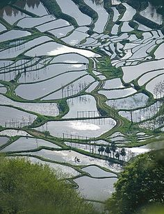 Terraced rice-fields in Niigata, Japan by dirench