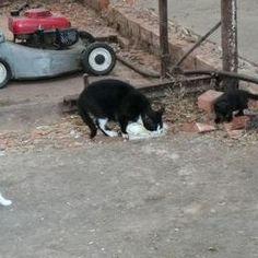 Moeder met katje