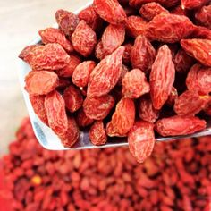 Goji Berries - Lycium Chinense by Armenos Spices n Herbs on Gourmly Gogi Berries, Berry Plants, Spices And Herbs, Beta Carotene, Unique Recipes, Vitamin E, Almond, Healthy Recipes, Snacks