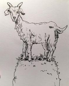 EOBrownArt #ink #sketch #drawing #drawinganimals #animals #goat #sketchbook #linedrawing