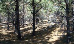 Pregon Agropecuario :: POR QUÉ UNA ZONA DE LA PATAGONIA ARGENTINA SE QUEDÓ SIN HORMIGAS - Suelos y Bosques - Bosques y Forestación