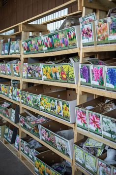 Nursery Supplies, Fall Planting, Citrus Heights, Daffodils, Butterflies, Bloom, Bulb, Birds, Spring