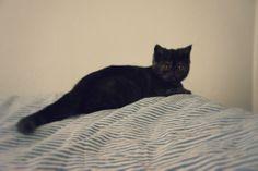 #cat #cats #kitten #holyshitcat