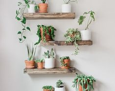Timber Edge Floating Shelves Lively up your space with our TIMBER EDGE floating shelves. For storage or display, these rustic shelves are sure to bring the great out doors into your home. Shelves are hand crafted from carefully selected House Plants Decor, Plant Decor, Plants In Bedroom, Fake Plants Decor, Plant Rooms, Living Room Plants Decor, Dorm Plants, Garden Bedroom, Plants On Balcony