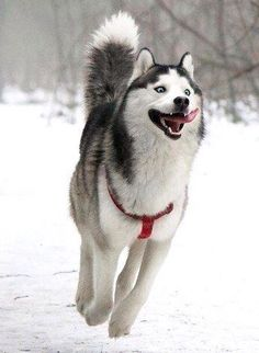 My favorite dog breed (no matter how silly-looking).