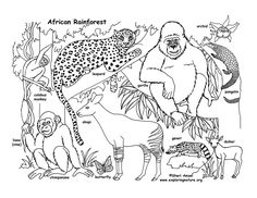 Rainforest (African) Coloring Pages