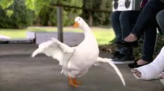 Epic AFLAC breakdancing duck commercial