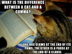 Be afraid classroom...be afraid!  the difference between cats and commas