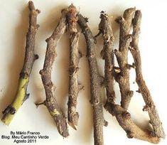 A época certa para plantar as estacas é no fim do inverno, aqui no Brasil o mês de agosto seria o ideal.        COMO FAZER MUDAS DE RE...