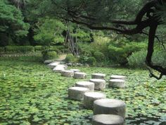 Stepping stones across water Plus Grand Que, Garden Supply Online, Gardening Magazines, Gardening Books, Gardening Courses, The Last Airbender, Faeries, The Magicians, Organic Gardening