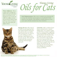 Young Living Essential Oils For Cats. www.facebook.com/YoungLivinghasanoilforthat