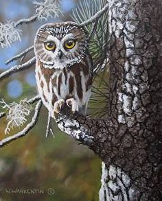 Saw Whet Owl by artist Wilf Warkentin. #owlart found on the FASO Daily Art Show - http://dailyartshow.faso.com