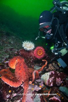 The water may be chilly, but within the depths of these 3 dive sites of the Pacific Northwest lies a treasure trove of underwater sights and creatures!